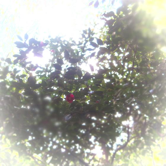 しだれ梅と椿まつり - 25.jpg