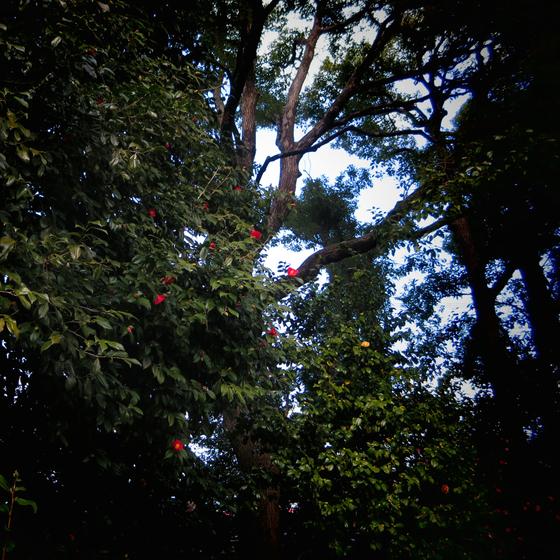 しだれ梅と椿まつり - 28.jpg