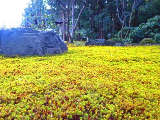 しだれ梅と椿まつり - 37.jpg