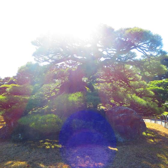 栗林公園 - 08.jpg