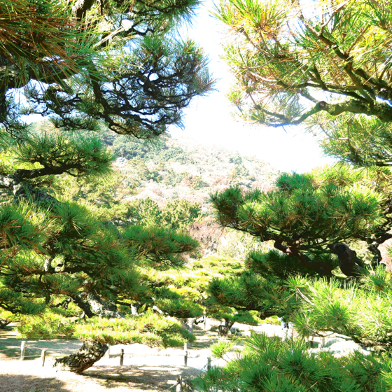 栗林公園 - 11.jpg