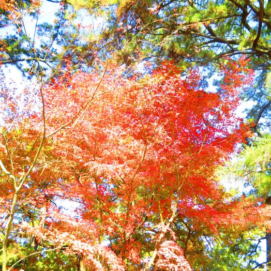栗林公園 - 12.jpg