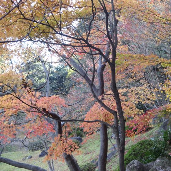 栗林公園 - 21.jpg