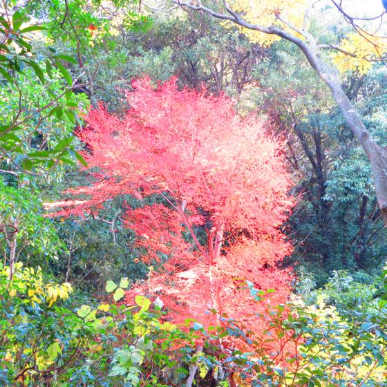 栗林公園 - 37.jpg