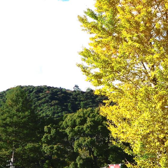 錦帯橋 - 09.jpg