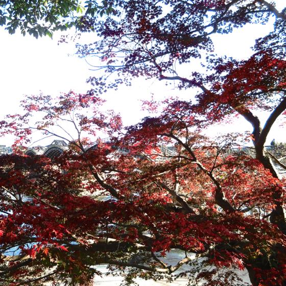 錦帯橋 - 10.jpg